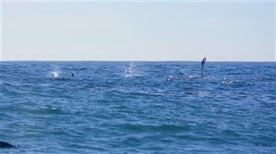 scubaco diving & travel -sardine run 2018