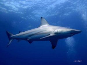 Travel Packages - ScubaCo Diving & Travel   South Afica