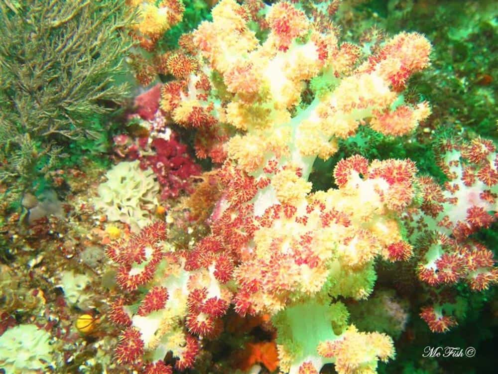 Bristal Coral southern reefs - scubaco