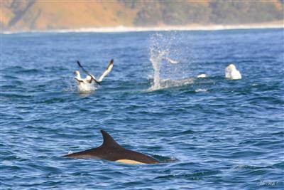 sardine run 2018 - ScubaCo Diving & Travel