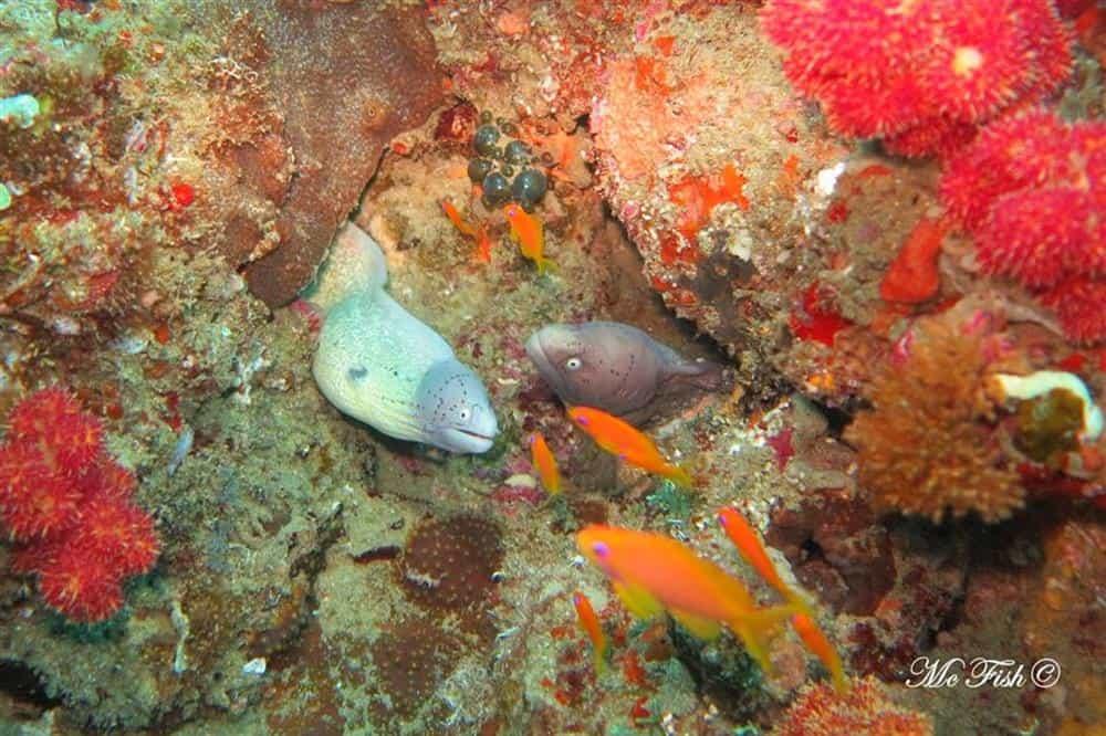 Geometric Moray southern reefs - scubaco