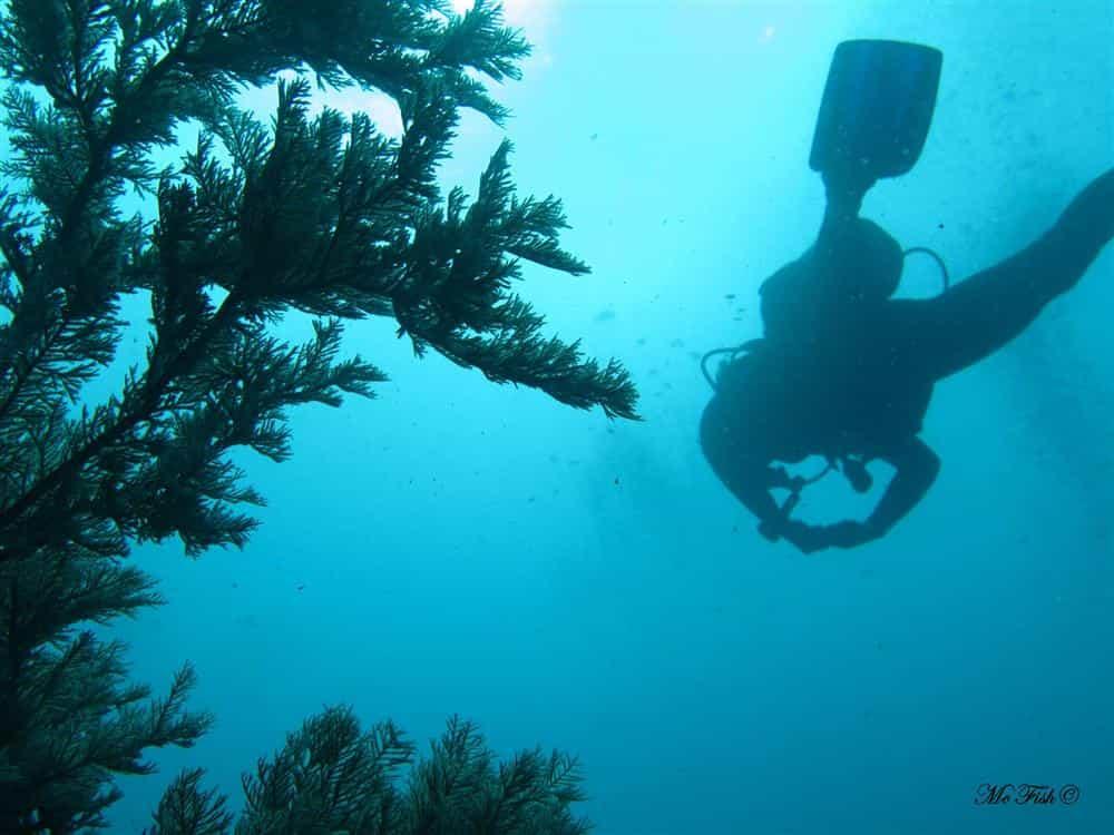 green fern aliwal shoal - scubaco
