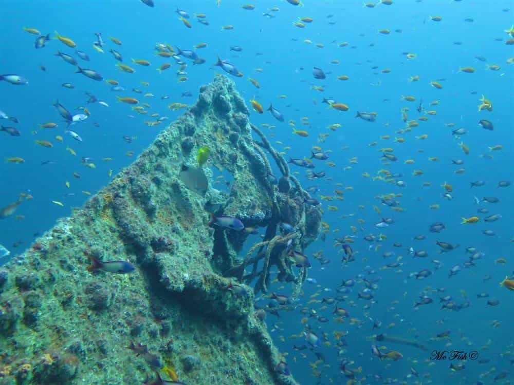 the mv produce wreck - aliwal shoal - scubaco
