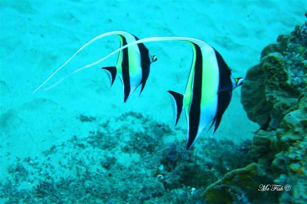 Moorish Idols southern reefs - scubaco