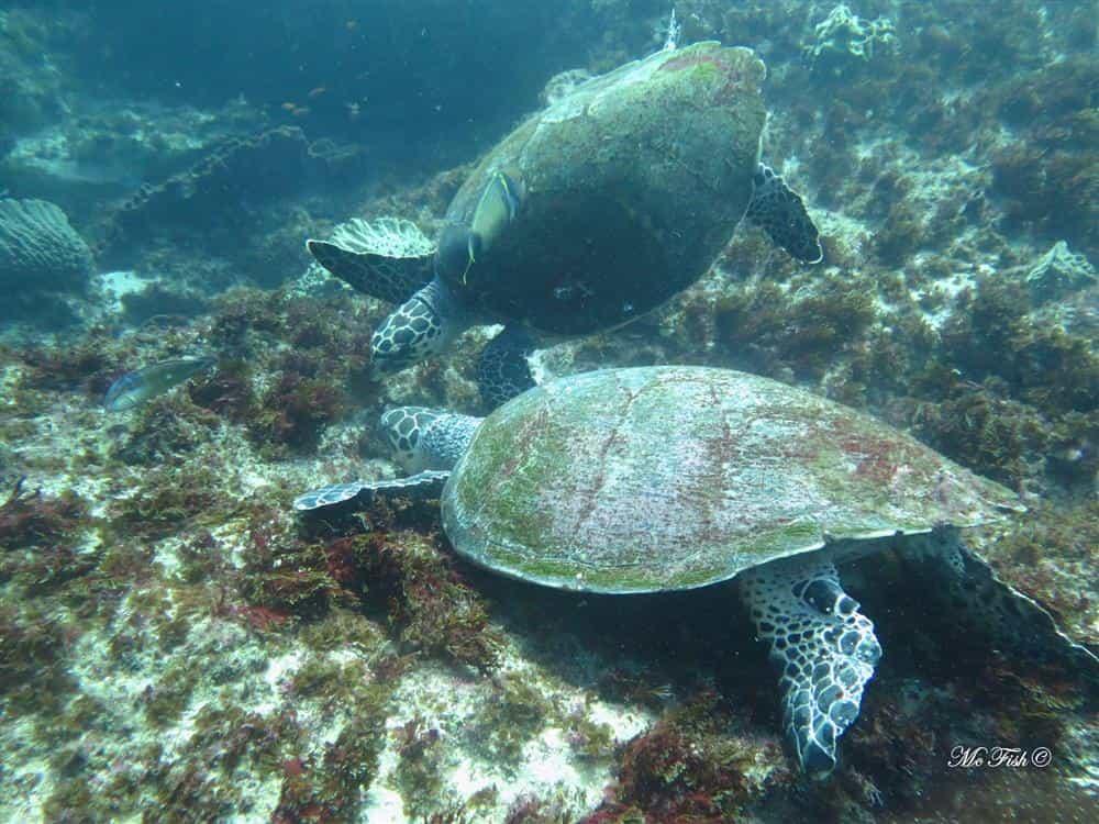 turtles aliwal shoal - scubaco