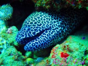 Dive aliwal shoal - moray eel - Aliwal Immersion