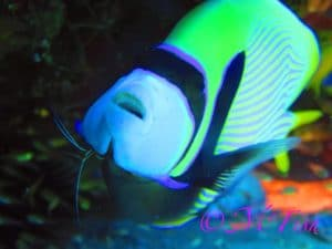 Aliwal Shoal tropical fish - Reef Diving - ScubaCo Diving & Travel