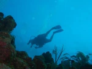 diving on aliwal shoal