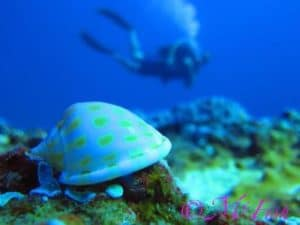 Dive Aliwal Shoal with ScubaCo Diving & Travel
