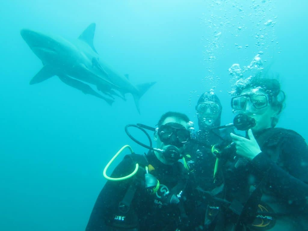 Jorn & Inge on their Baited Shark Dive