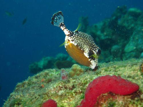 ScubaCo Dive & Safari - Aliwal Shoal