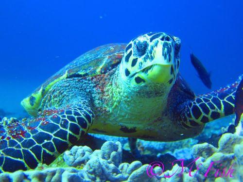 ScubaCo Dive & Safari - sea turtle