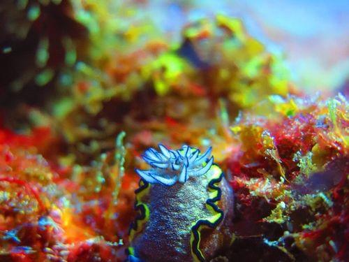 ScubaCo Dive & Safari - aliwal shoal coral