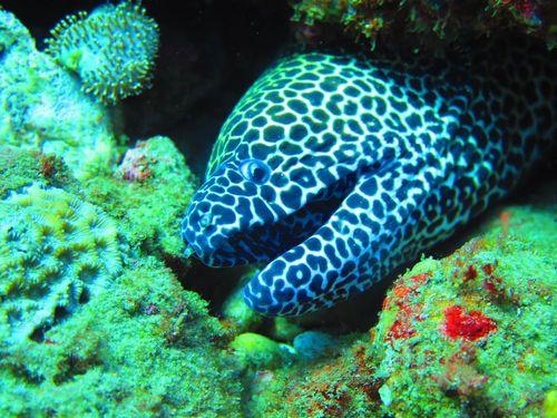 aliwal shoal - dive - scubaco - moray eel