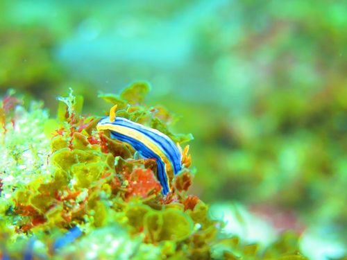 aliwal shoal - sea life - scubaco