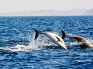 dolphins at sardine run travel package trip