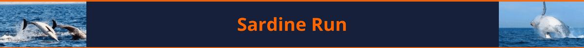 sardine run - travel package - scubaco