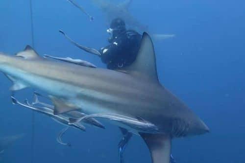 scubaco diving professionals - jp
