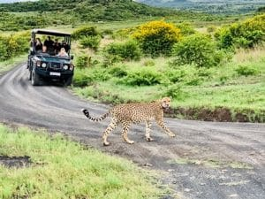 dive & safari travel packages