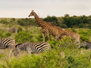 african dive & safari experience travel packages